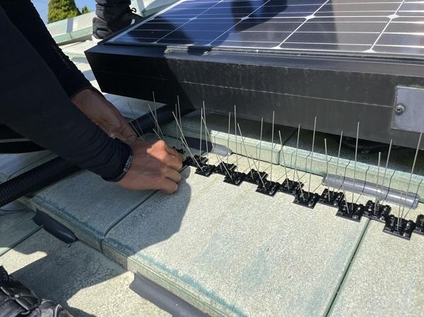 徳島県阿南市 O様邸 雨漏り補修(屋根漆喰補修) 鳥害対策工事 防鳥のバードピンとは (1)